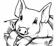 Free coloring and drawings Too cute pig Coloring page