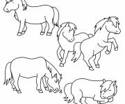 Coloring pages Pony and horses