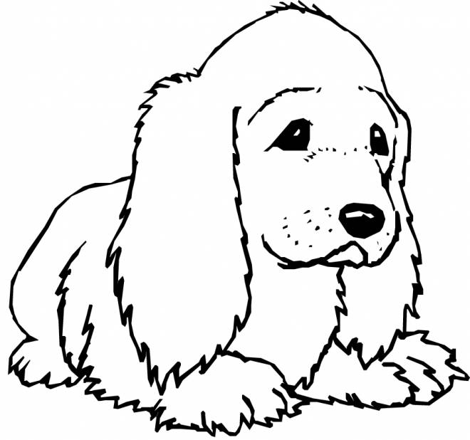 Free coloring and drawings Color puppy Coloring page