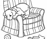 Free coloring and drawings Dog on the armchair Coloring page