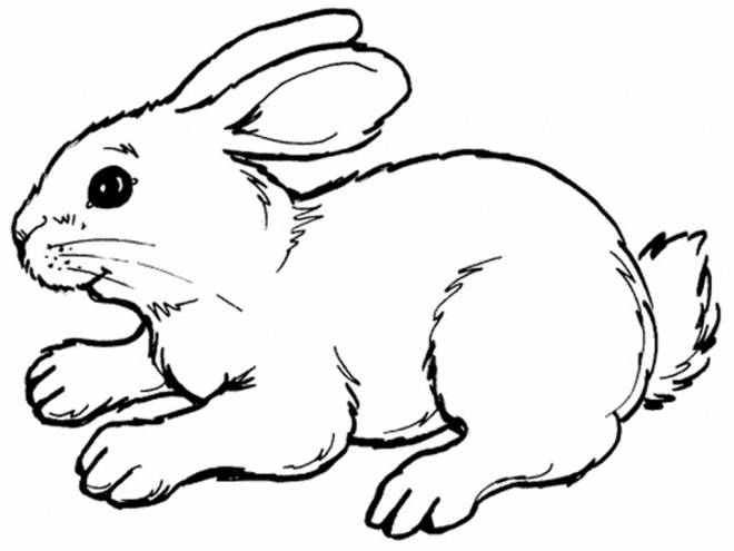 Free coloring and drawings Color rabbit Coloring page