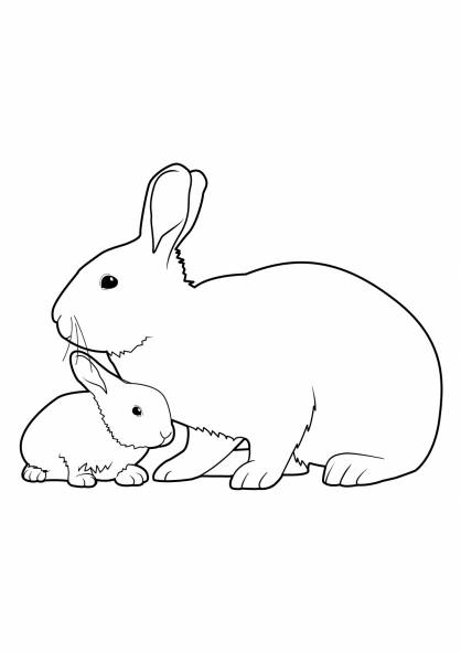 Free coloring and drawings Rabbit and baby Coloring page
