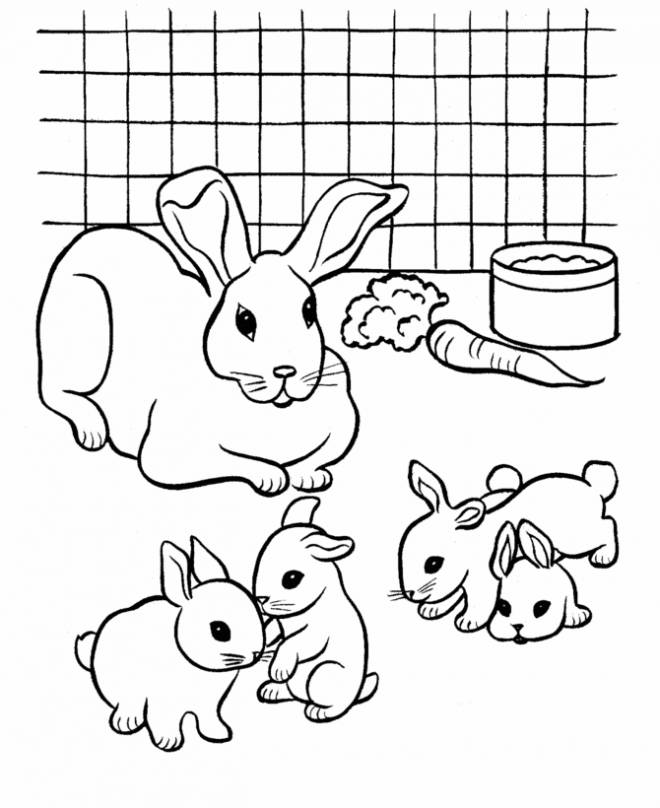 Free coloring and drawings Rabbit and cubs Coloring page