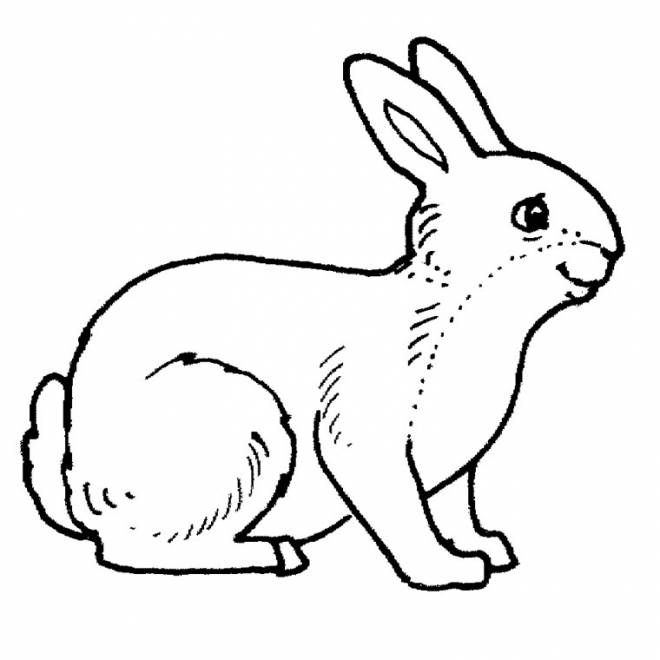 Free coloring and drawings Smiling rabbit Coloring page