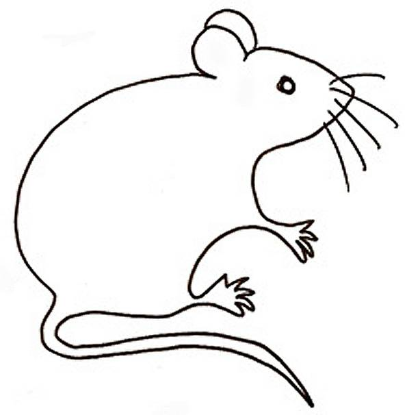 Free coloring and drawings Maternal rat Coloring page