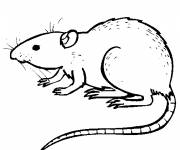 Coloring pages Rat easy