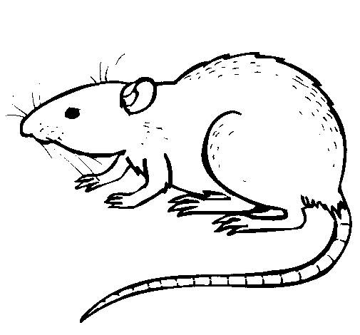 Free coloring and drawings Rat easy Coloring page