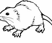 Free coloring and drawings Rat in vector Coloring page