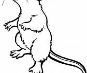 Coloring pages Standing rat