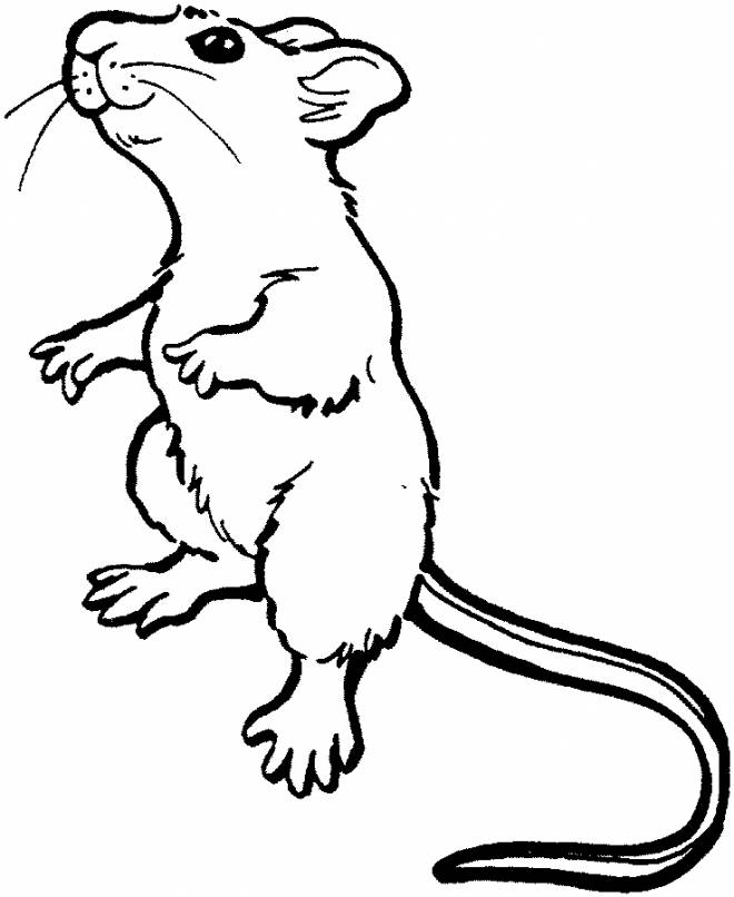 Free coloring and drawings Standing rat Coloring page