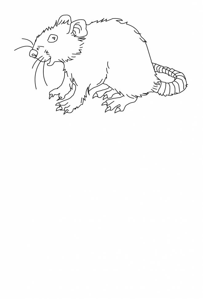 Free coloring and drawings Stylized rat Coloring page