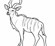 Coloring pages Adult reindeer