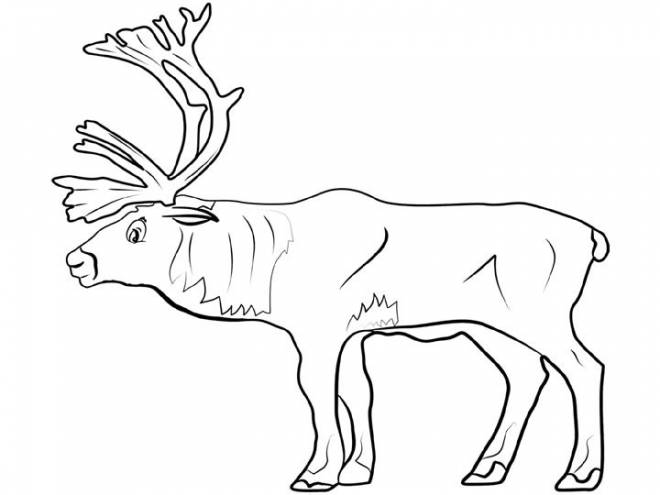 Free coloring and drawings Adult Reindeer to download Coloring page