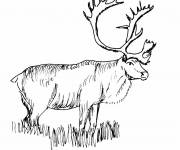 Free coloring and drawings Black and white Reindeer Coloring page