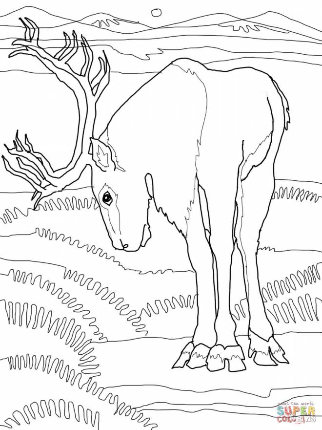 Free coloring and drawings Caribou eating Coloring page