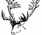 Coloring pages Color Reindeer Head