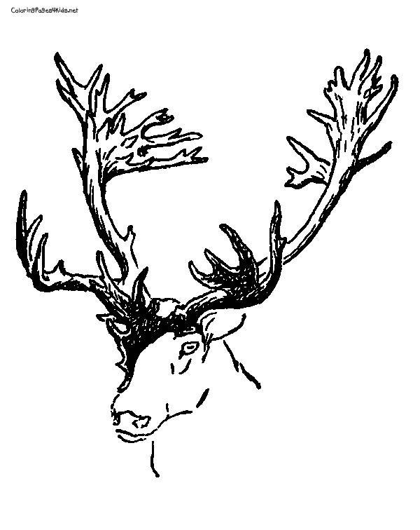 Free coloring and drawings Color Reindeer Head Coloring page