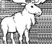 Coloring pages Drawing of an adult reindeer