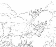 Coloring pages Giant Reindeer