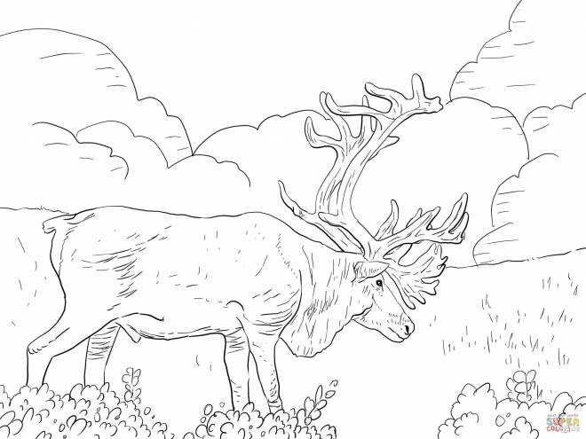 Free coloring and drawings Giant Reindeer Coloring page