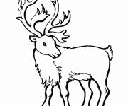 Coloring pages Portrait of a Reindeer