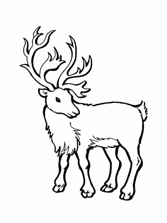 Free coloring and drawings Portrait of a Reindeer Coloring page