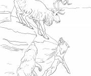 Coloring pages Reindeer and wolves