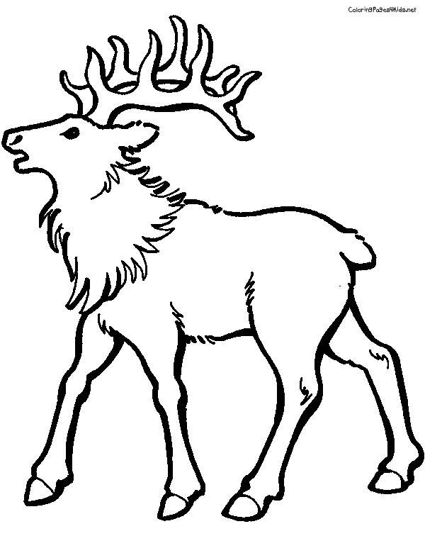 Free coloring and drawings Reindeer animal Coloring page