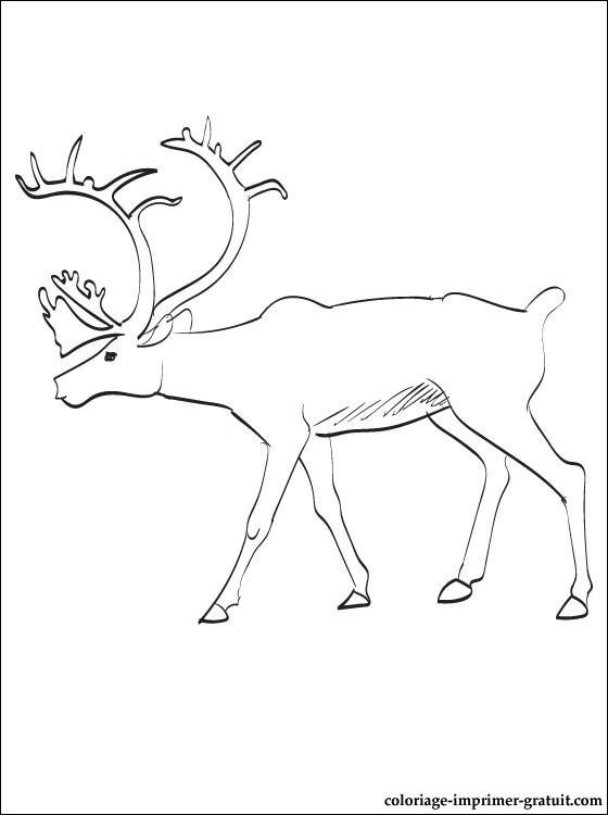 Free coloring and drawings Reindeer for children Coloring page