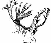Free coloring and drawings Reindeer head Coloring page