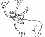 Free coloring and drawings Reindeer in color Coloring page