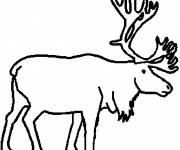 Free coloring and drawings Reindeer in pencil Coloring page
