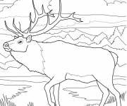 Free coloring and drawings Reindeer in the forest Coloring page