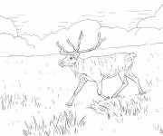 Coloring pages Reindeer in the plain