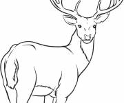 Coloring pages Reindeer is watching you