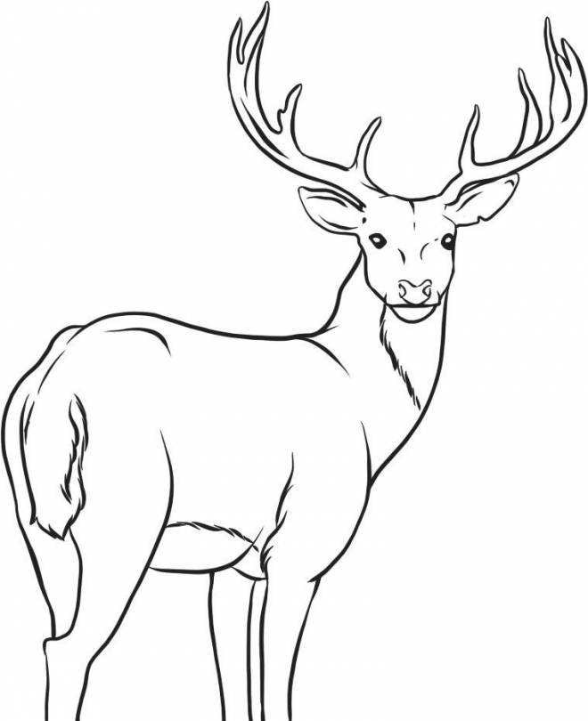 Free coloring and drawings Reindeer is watching you Coloring page
