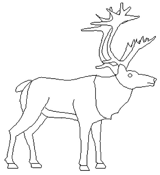 Free coloring and drawings Reindeer looking up Coloring page