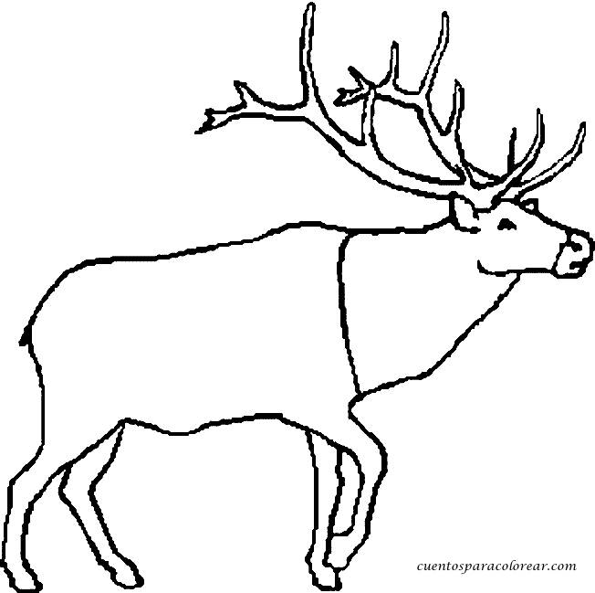 Free coloring and drawings Reindeer simple Coloring page