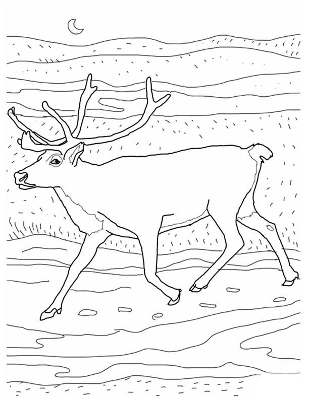 Free coloring and drawings The reindeer in the open air Coloring page