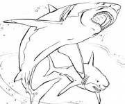 Coloring pages Realistic shark