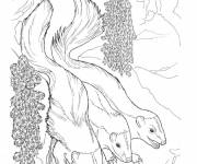 Free coloring and drawings Realistic skunks Coloring page