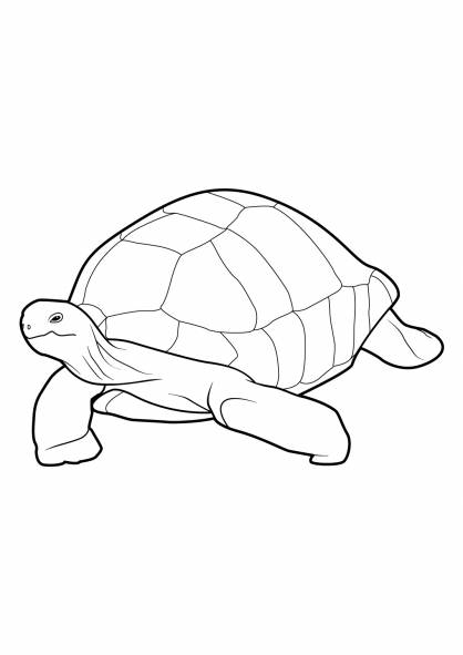 Free coloring and drawings A big turtle Coloring page