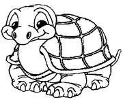 Free coloring and drawings A little turtle Coloring page