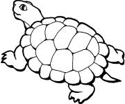 Free coloring and drawings Easy land turtle Coloring page