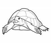 Coloring pages Gigantic land turtle