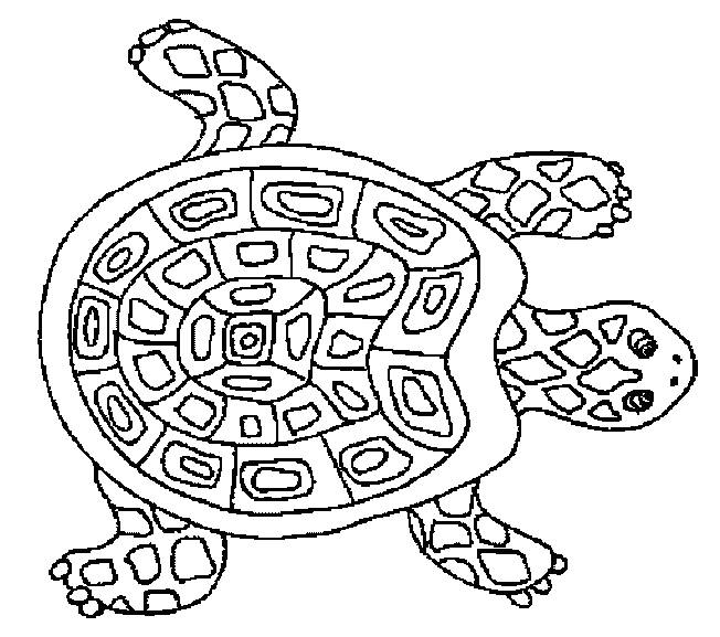 Free coloring and drawings Mandala turtle Coloring page