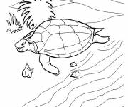 Coloring pages Turtle comes out of the water