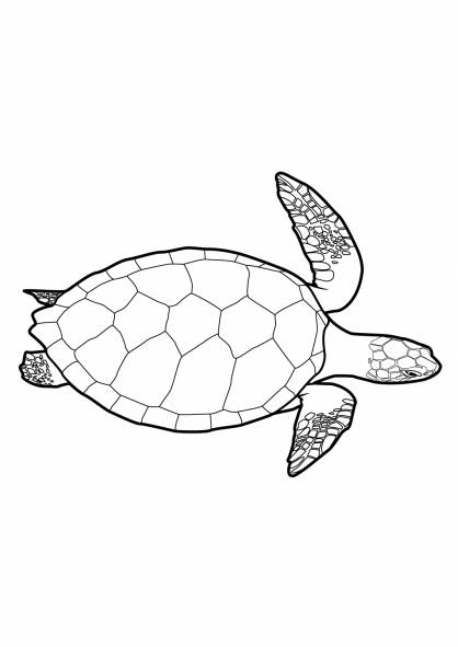 Free coloring and drawings Turtle seen above Coloring page