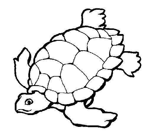 Free coloring and drawings Turtle swimming Coloring page