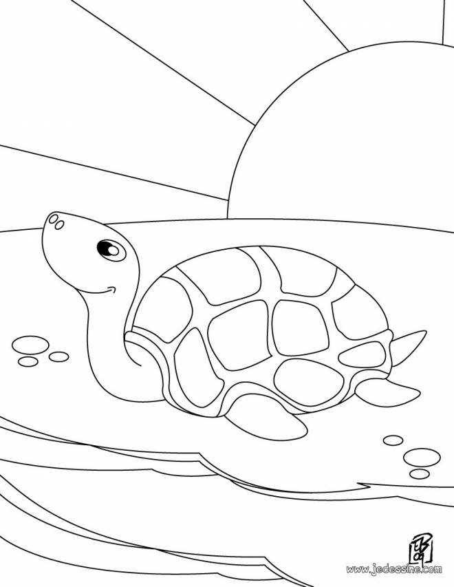 Free coloring and drawings Turtle under the sun Coloring page